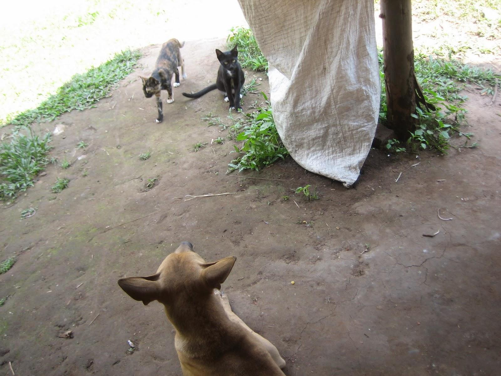 thailand-stray-dog-cat
