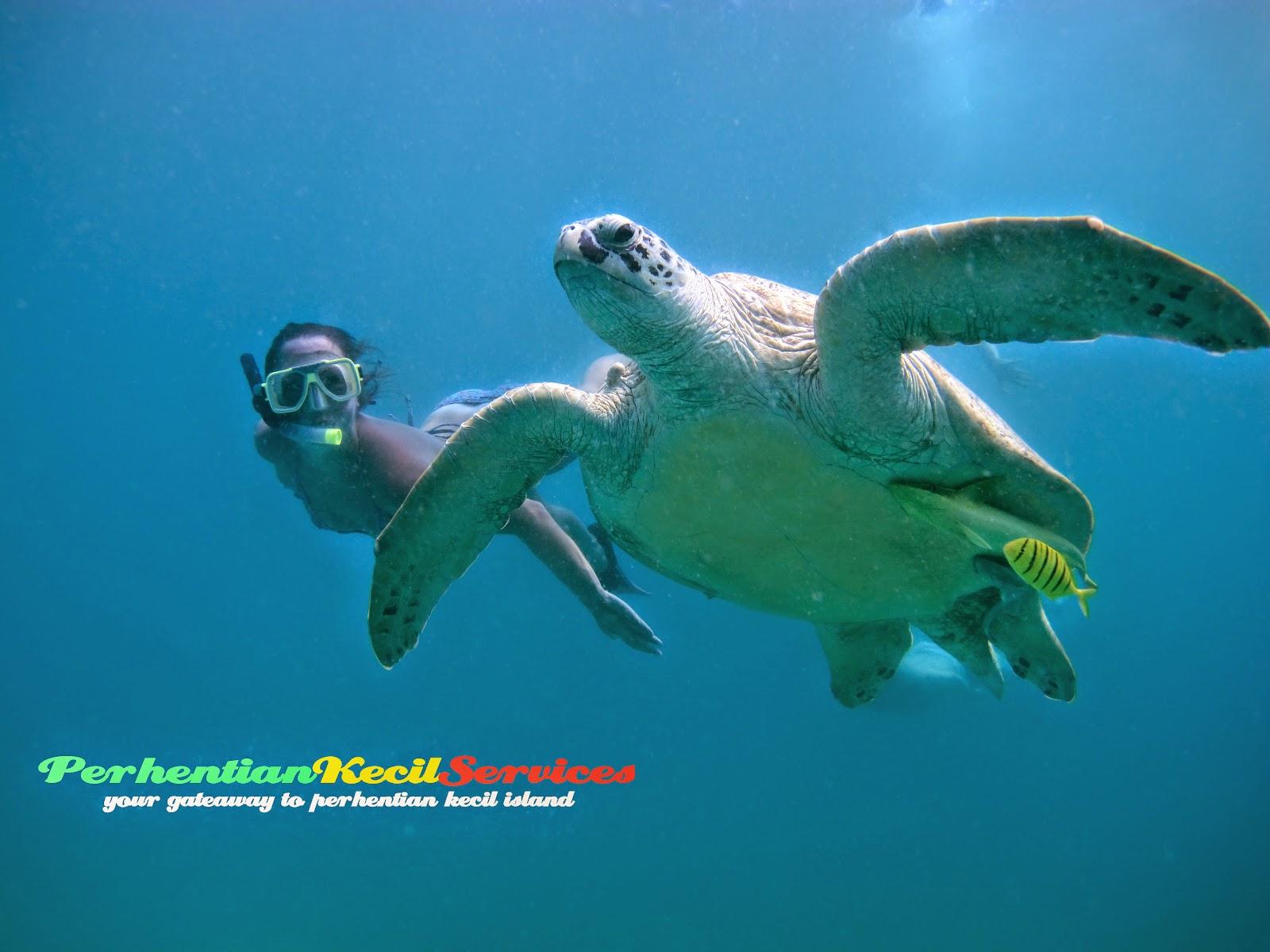 Jom snorkeling di Pulau Perhentian Kecil