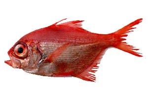 Aprendiendo a cocinar pescados ii for Cocinar pez espada