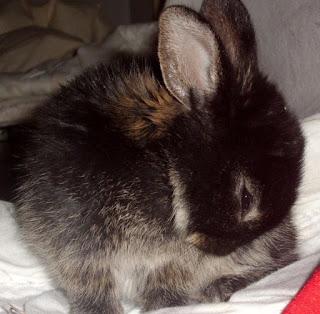 króliczka miniaturka - już Jej nie ma