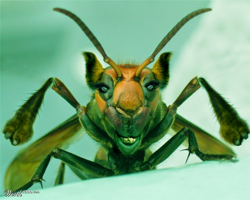 The Insect World: Funny and Weird