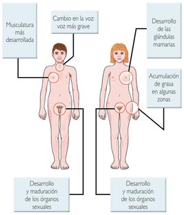 caracteristica comun biologico fisica psicologica hombre mujer: