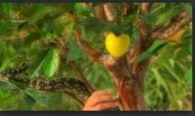 History Channel Decoding The Past Mysteries Of The Garden Of Eden Pdtv Entire