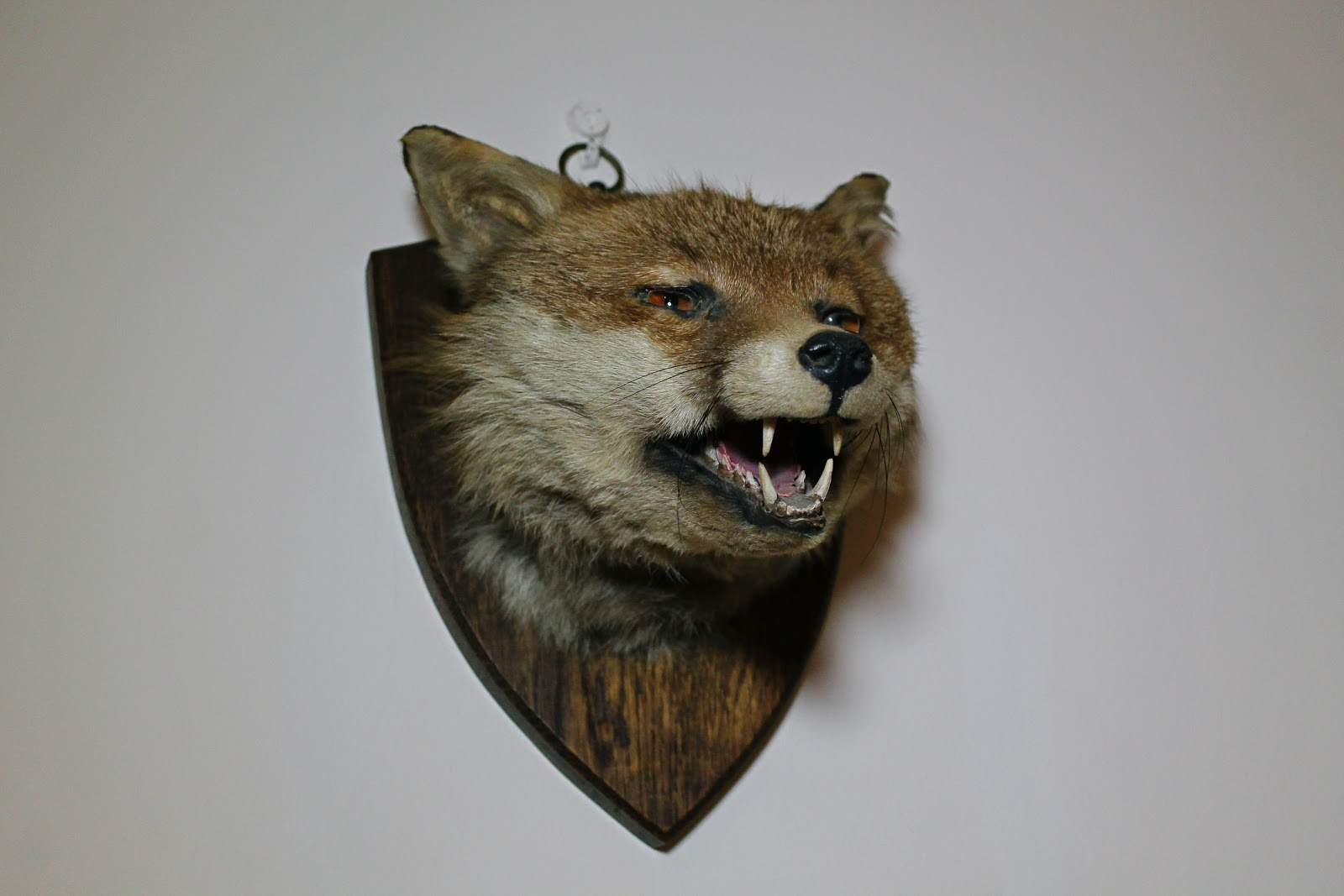 antique taxidermy fox