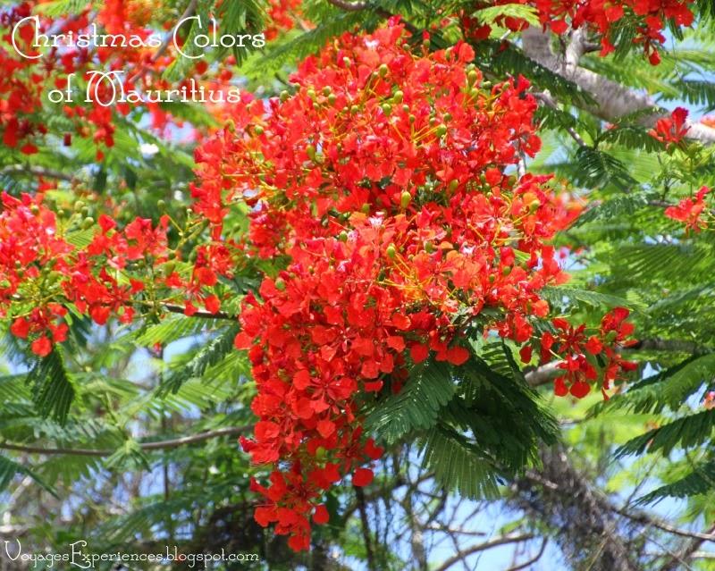 Voyages et exp riences maurice exotisme et couleurs des for Egayer synonyme