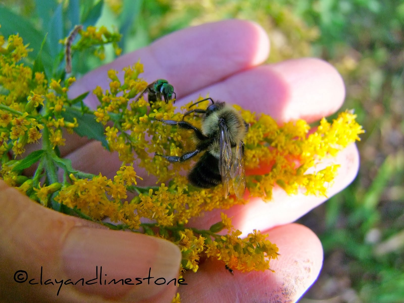 WANT TO HELP POLLINATORS?