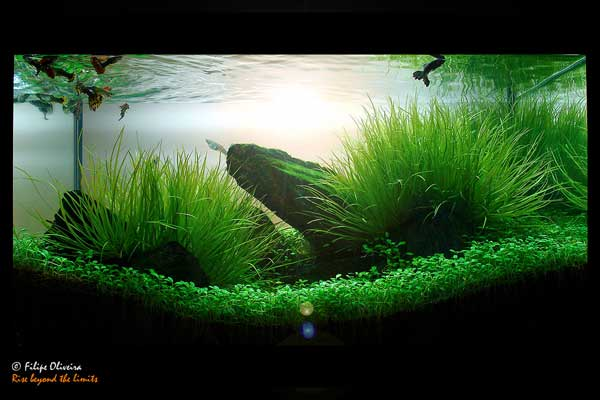 How to make aquascape with simple design house design and interior decoration - Design aquasacpe ...