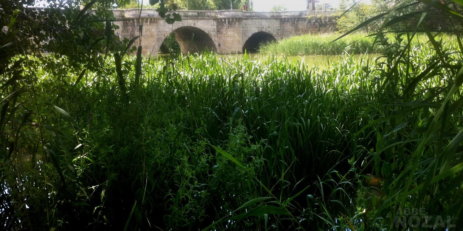 El río de la vida desde el lado de la vida, 2014 Abbé Nozal