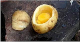بالفيديو.. هذا الرجل وضع بيضة في حبة بطاطا... فكرة فريدة من نوعها شاهد النتيجة !!