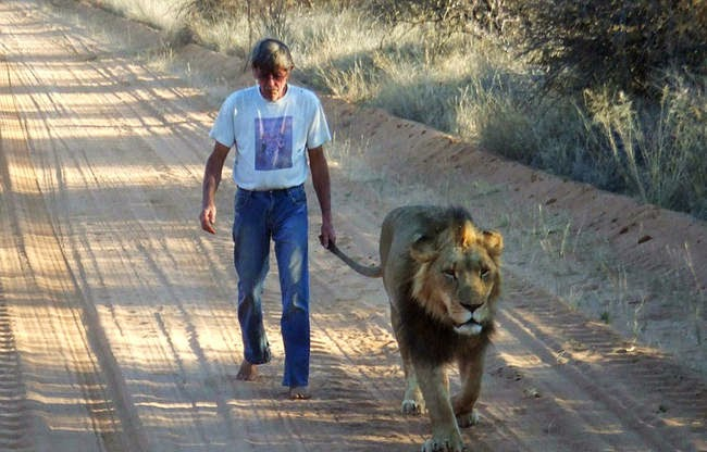 In fact, Zion is such a sensitive softie that his caretaker also goes without shoes so the noise doesn't disturb him. - This Is The Story Of A Man And His Best Friend, A Lion Named Zion