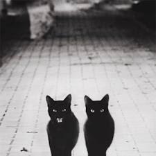 """Μαύρες γάτες: Γιατί τις """"τρέμουμε"""";-Και επειδή όλα είναι πιθανά, ένα καλό ξόρκι..."""