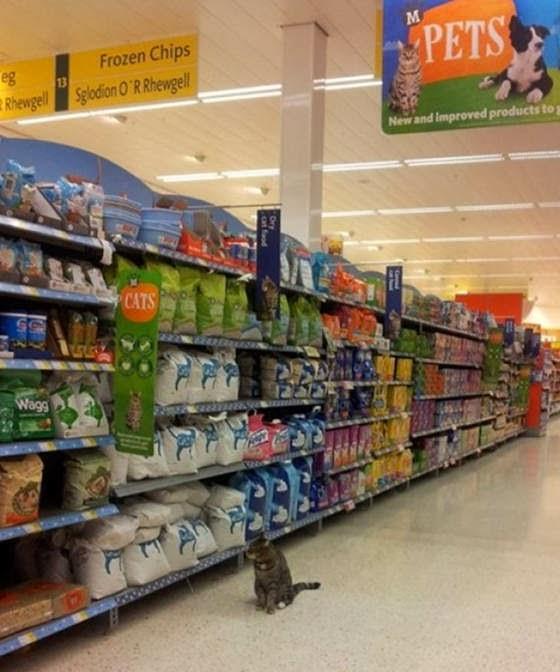 Brutus si Kucing Supermarket berjalan jelan di lorong supermarket