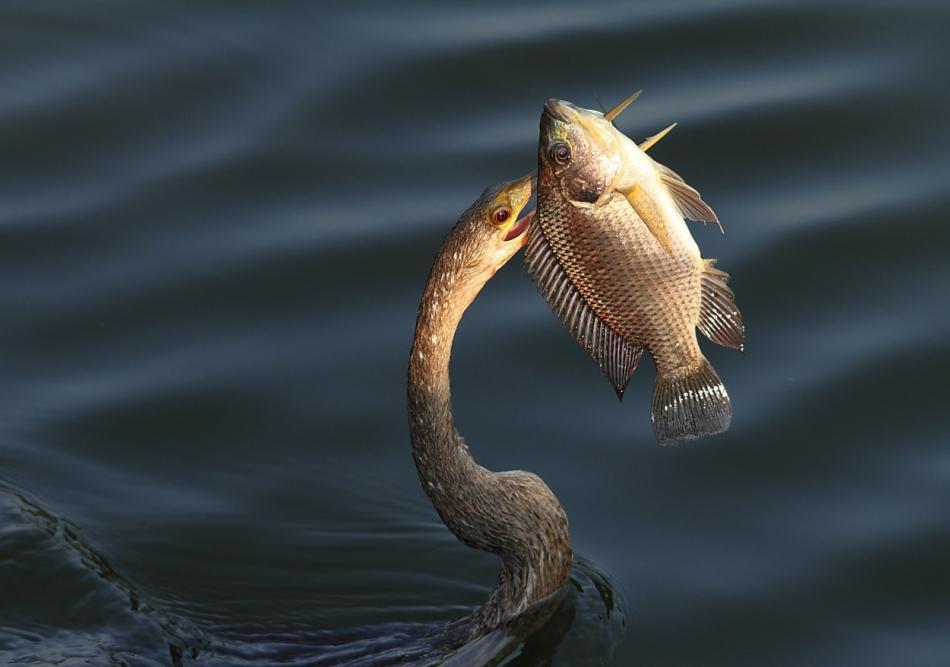 Chi viaggia impara immagini dal mondo stati uniti d for Un pesce allevato in acque stagnanti