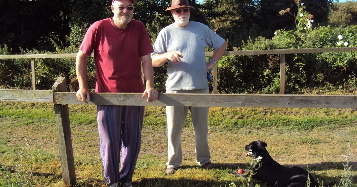 Medway Dog Walking