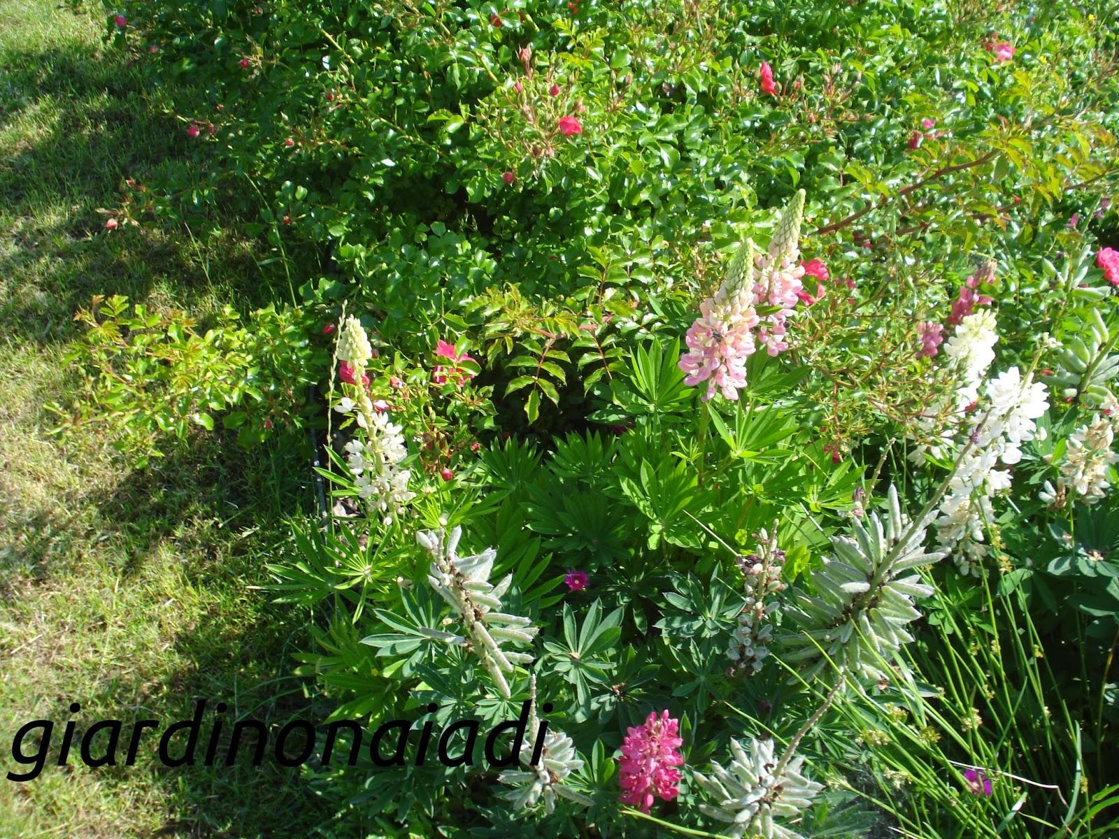 il giardino delle naiadi: lo stile: il giardino di campagna - Come Progettare Un Giardino Rettangolare