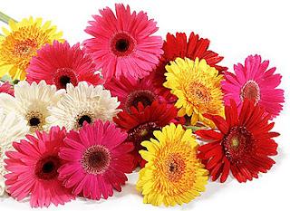 flores.culturamix.com