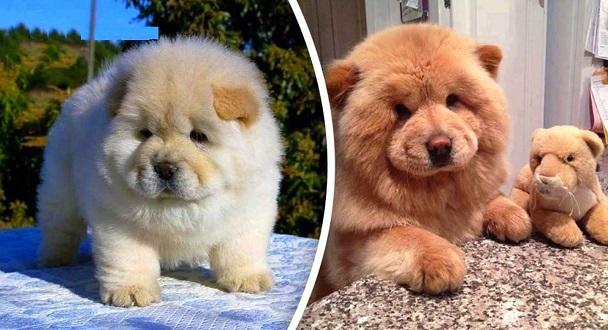 Los perros mas bonitos gallery - Los banos mas bonitos ...