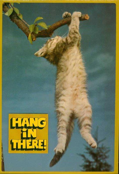 Hang in There Kitten Wallpaper Desktop HD