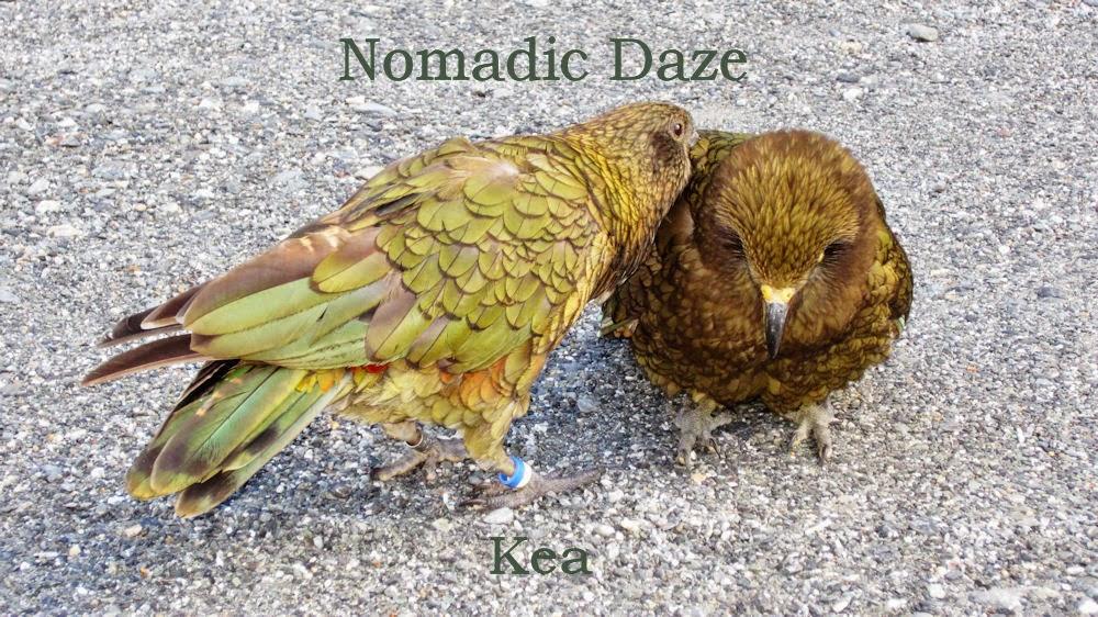 Nomadic Daze