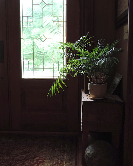 houseplant in entry way