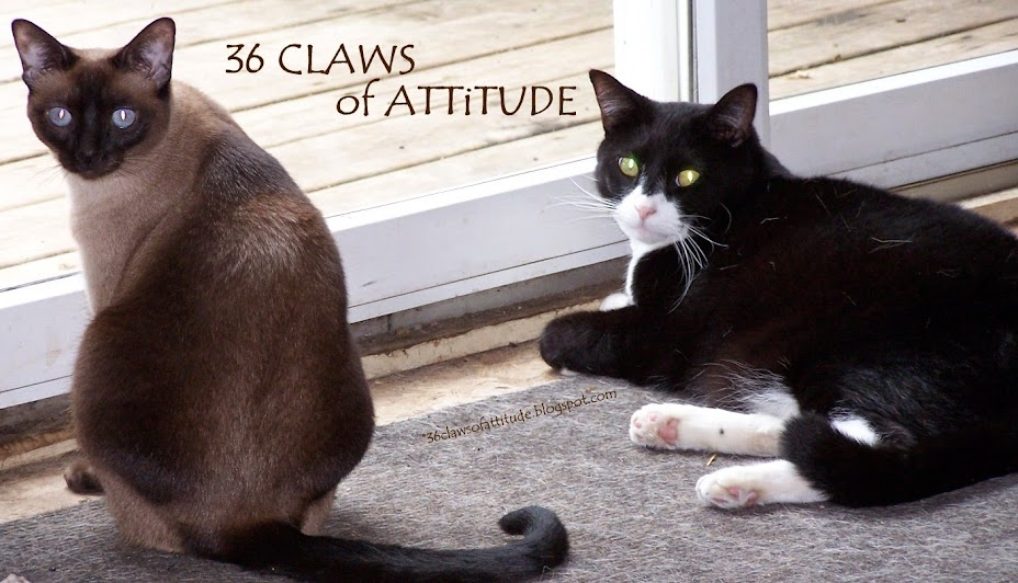 36 Claws of Attitude