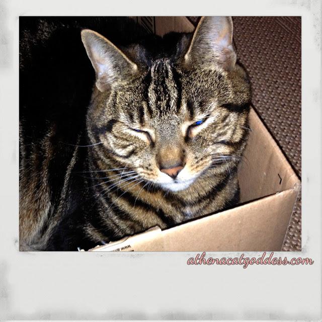 selfie in a box