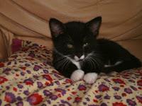 My Lovely, Mischievious Cat Freddie
