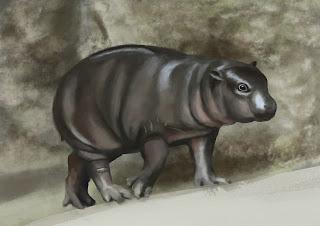 baby hippo study