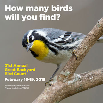 21st Annual GBBC Feb. 16 - 19