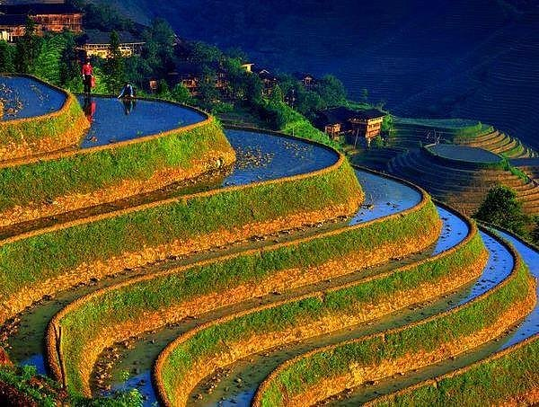 Rice terraces in southeast asia and china facts pod for The terraces 2