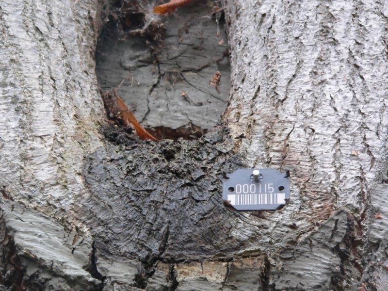 Reha Klinik Baum Rinde