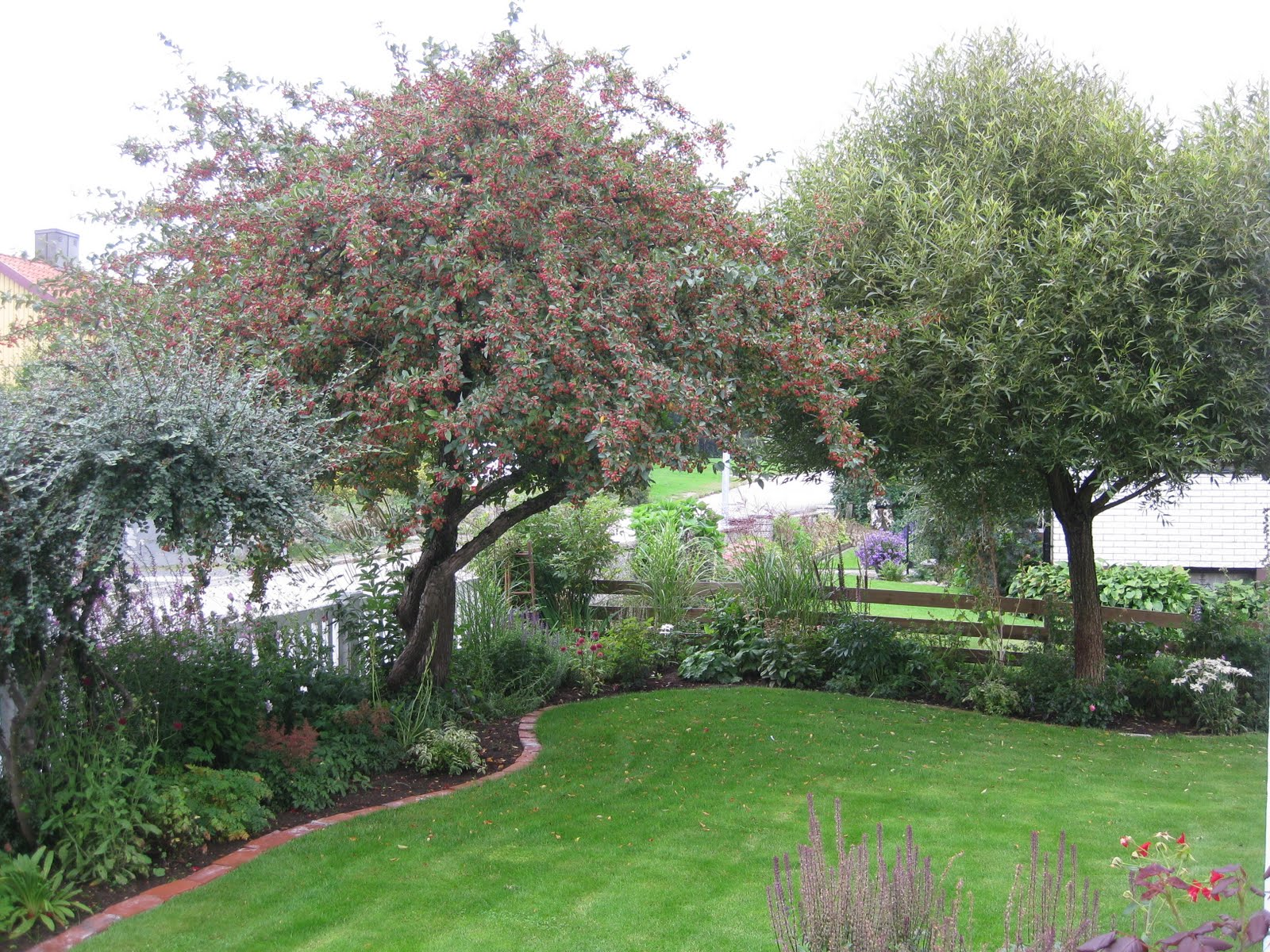 träd liten trädgård