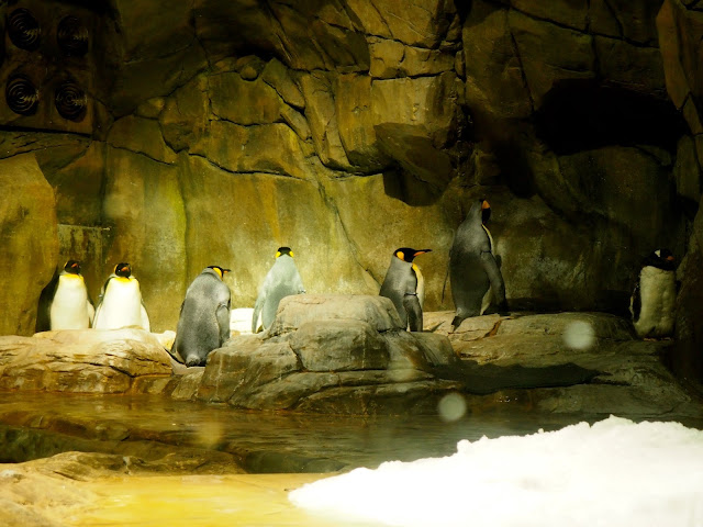 Emperor Penguins in South Pole Spectacular exhibit, Ocean Park, Hong Kong