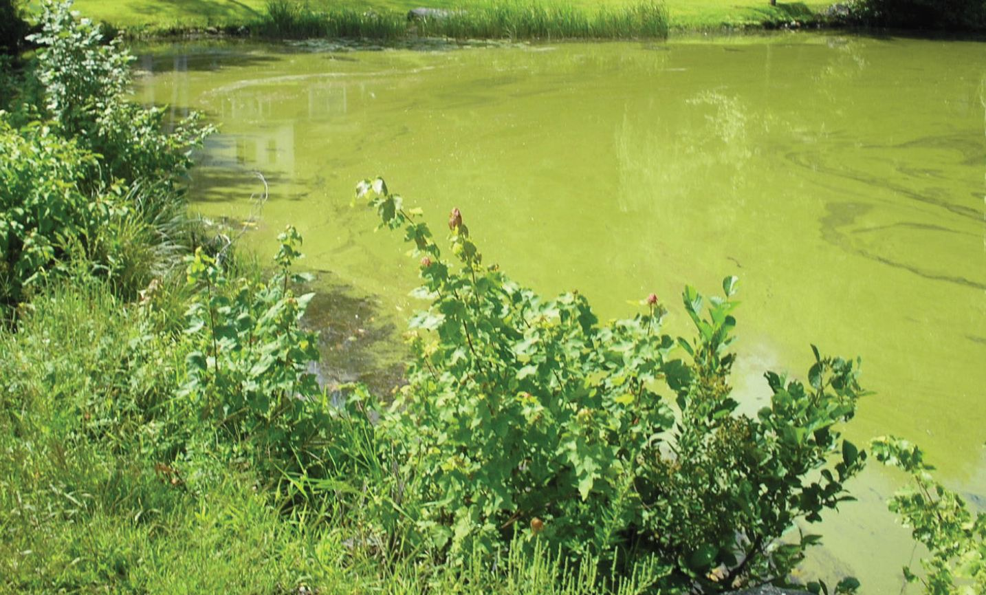 Progressive charlestown health warning about toxic for Green water in pond