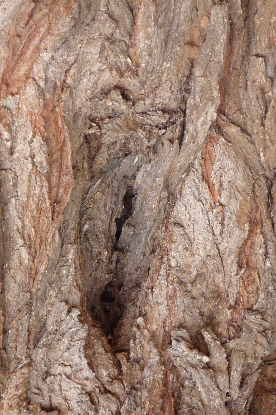 Fotos de panochas peludas