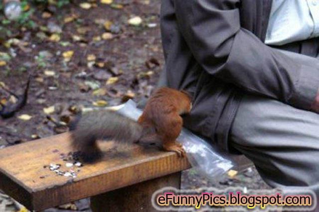 Finally I Found My Nuts
