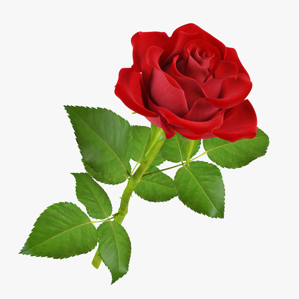 Arreglos florales en puebla historia y significado de la - Significado de las rosas rosas ...