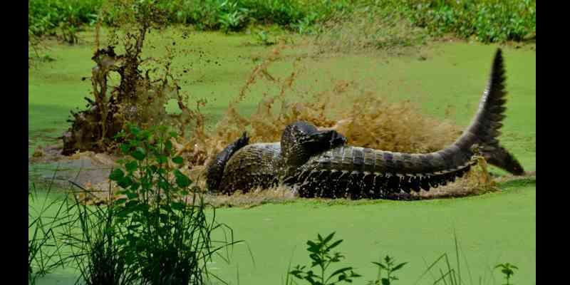 10 Tempat Wisata Paling Top di Sri Lanka - Yala National Park