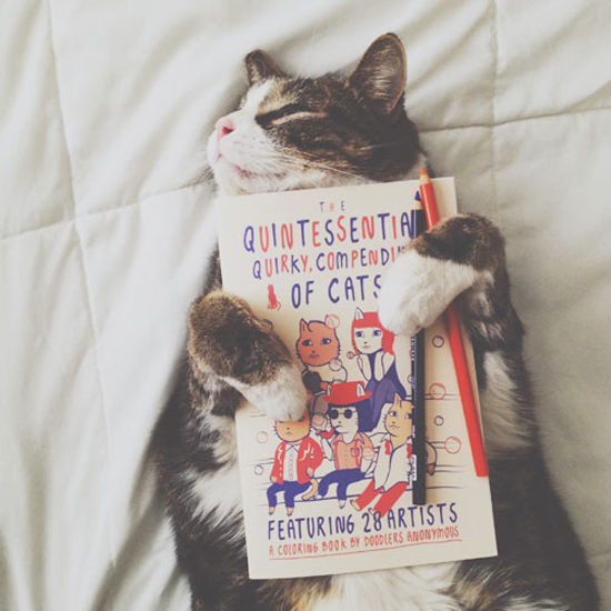 The Quintessential, Quirky, Compendium of Cats