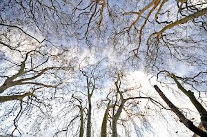 Árbores que se comunican como neuronas
