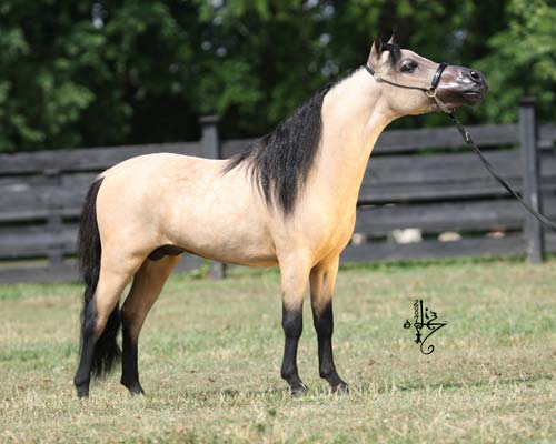 Horses for Sale  Horse Classifieds  Quarter Roping