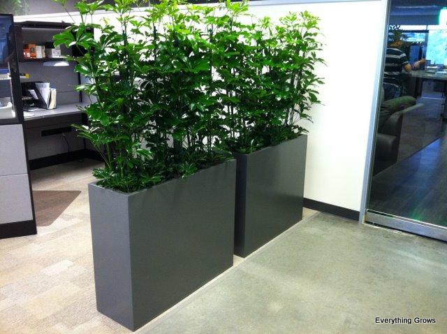 Divisional Planters On Pinterest Planters Restaurant