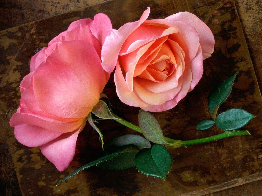 http://2.bp.blogspot.com/-FJyzGhCSb7g/T4aQCd-C3AI/AAAAAAAAAdc/6cRKfRcJpZo/s1600/Beautiful-Flowers-329-30HFMDV7TH-1024x768.jpg