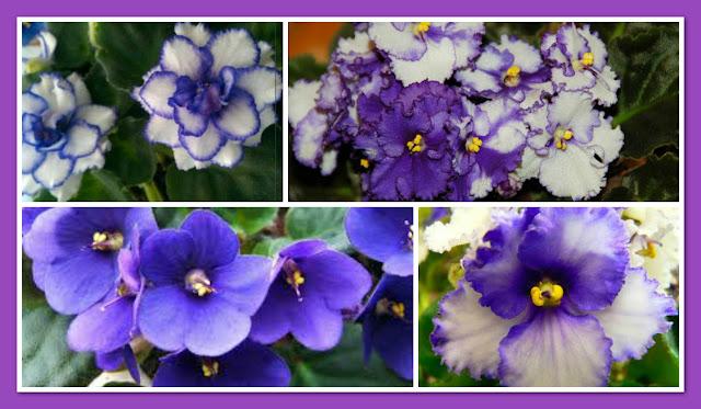 violeta-belanaselfie-e