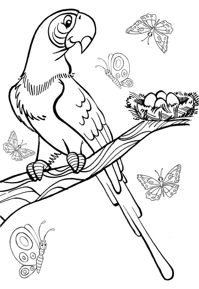 Desenho como desenhar Os animais mais adorados pelas crianças pintar e colorir