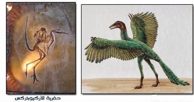 الأركيوبتركس Archaeopteryx