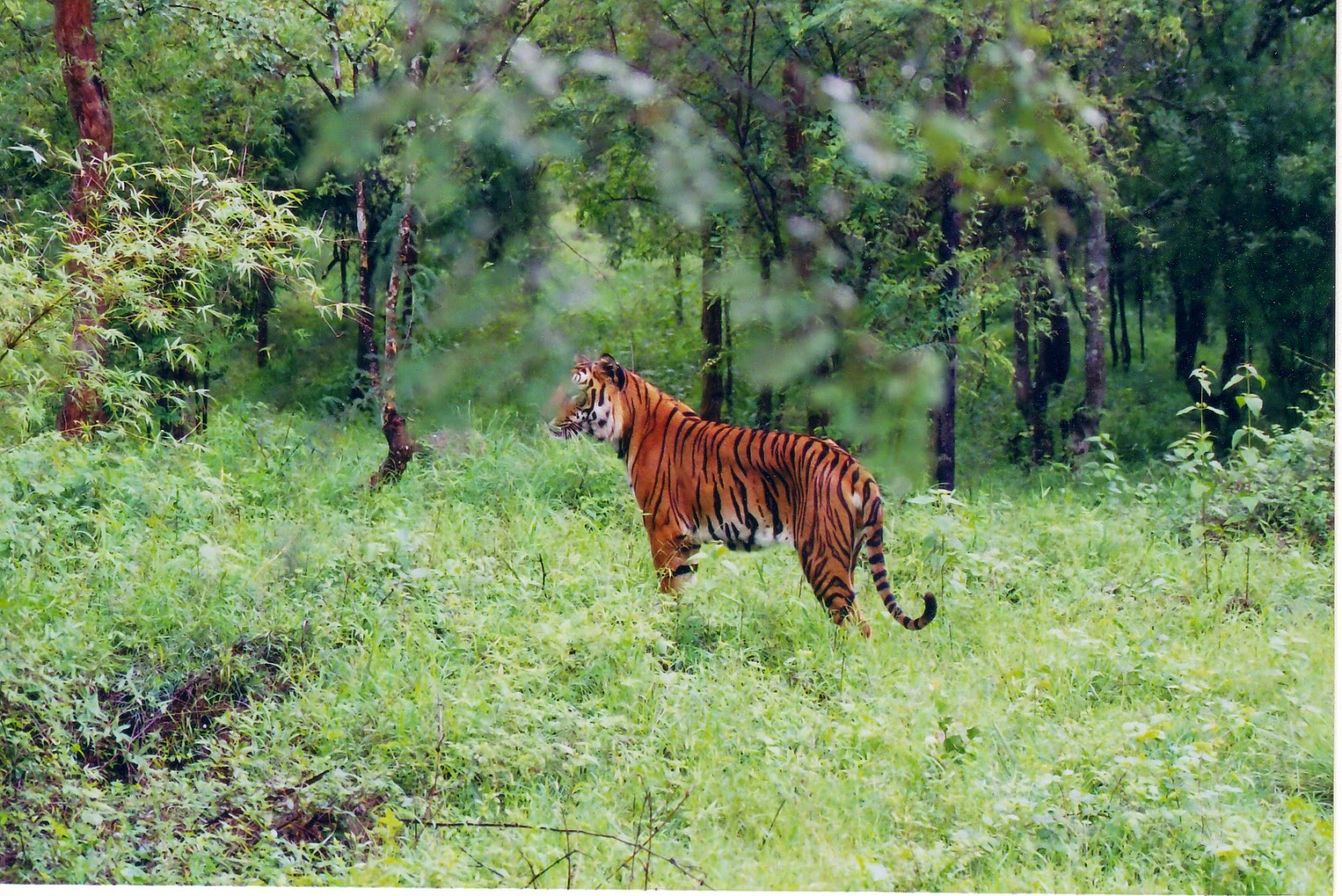 Tiger reserve in India- Jim Corbett national park