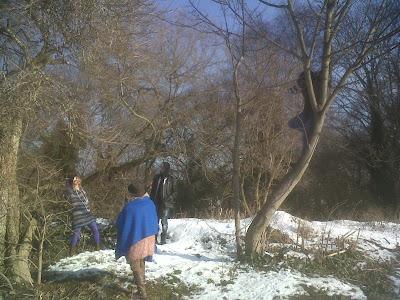 Enzo in a tree