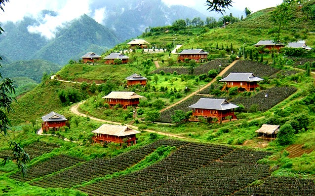 Rose Valley in Sapa