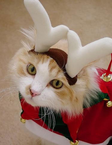 Cat Christmas deer